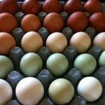 Rainbow Egg Company